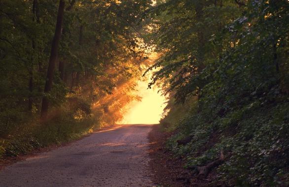 sunlight-166733